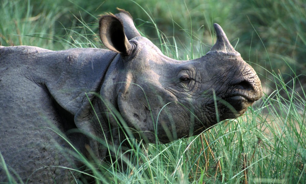 Nepal to gift 2 rhinos to China